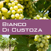 Weinsorte: Bianco di Custoza