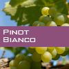 Weinsorte: Pinot Bianco
