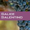 Weinsorte: Salice Salentino