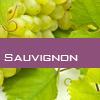 Weinsorte: Sauvignon